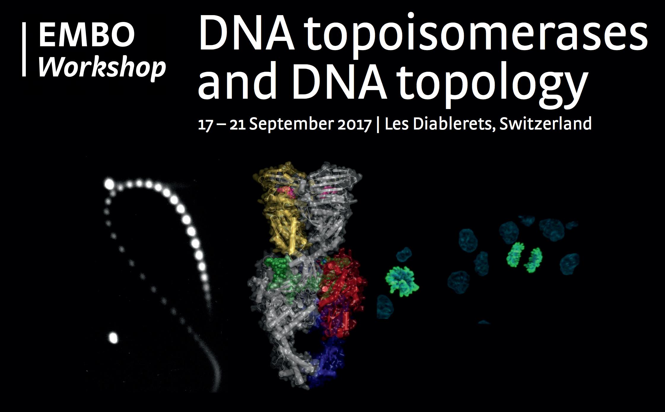 topoisomerase